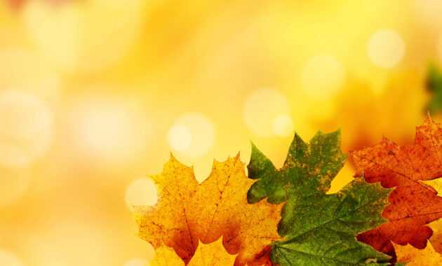 Autumn Ppt Background - Colona.rsd7 with Free Fall Powerpoint Templates